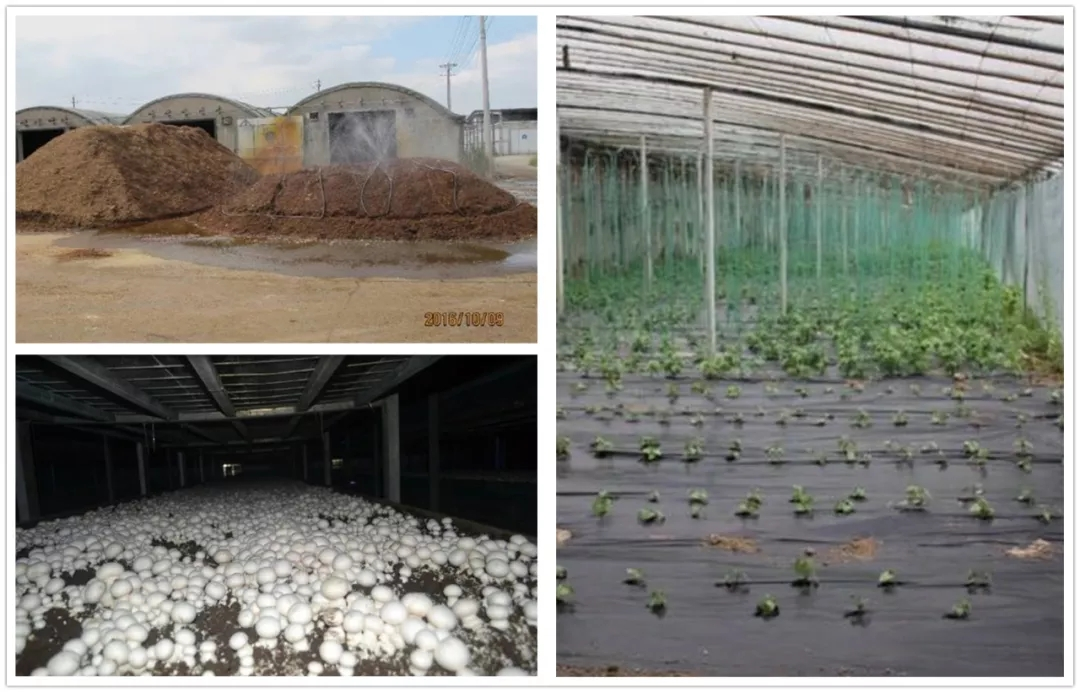 农业资源循环利用新成果与新技术