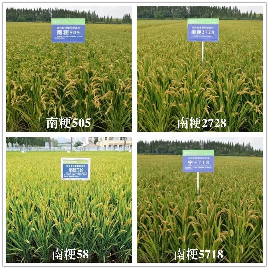 优质食味粳稻新品种