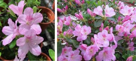 观赏植物新品种与新技术