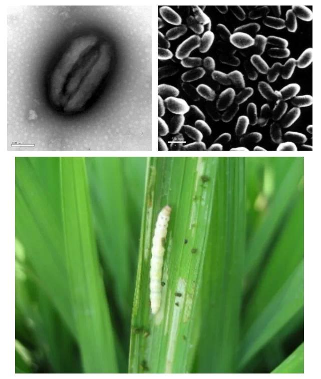 农药和植保技术